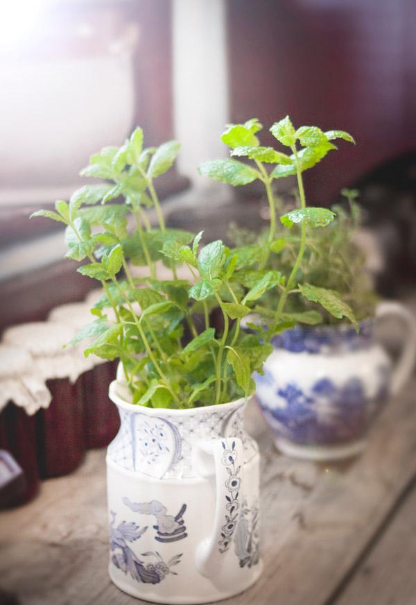 plantas-aromaticas-2