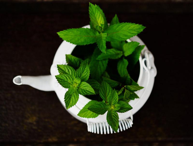 plantas-aromaticas-3