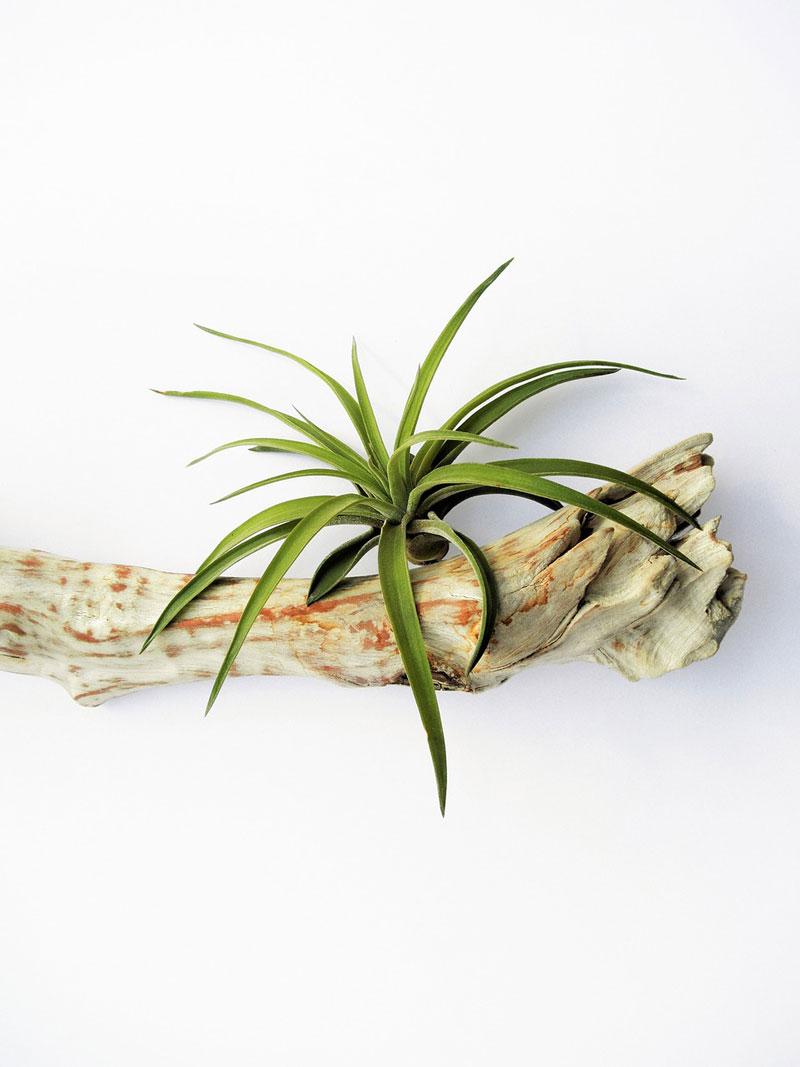plantas-de-aire2