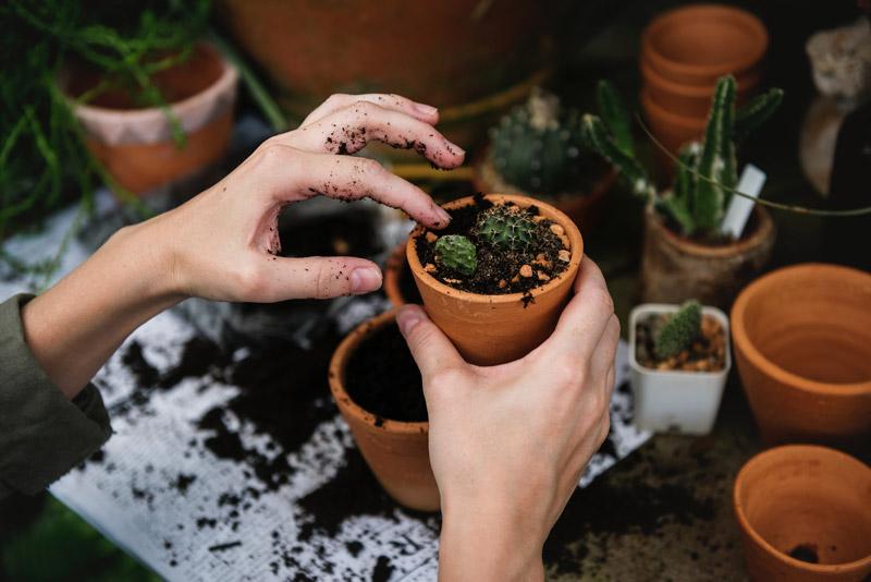 plantas-en-casa-2