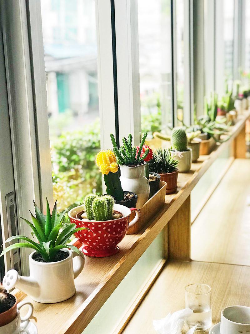 plantas-en-casa-3